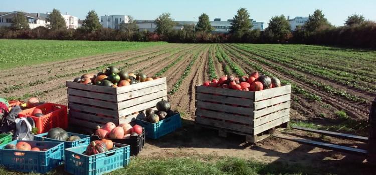 Was ist solidarische Landwirtschaft?
